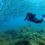 Siti immersioni a Ustica: ecco quali sono i più belli dell'isola