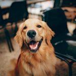 Mastocitoma nel cane, quali sono le aspettative di vita?