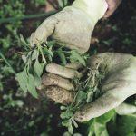 Come fare un diserbante naturale per le erbacce