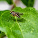 Perché prude la puntura di zanzara